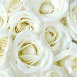 Bedeutung von roten Rosen