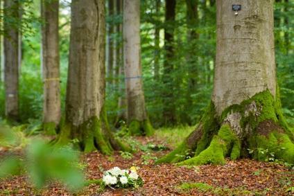 Begräbnis im Wald